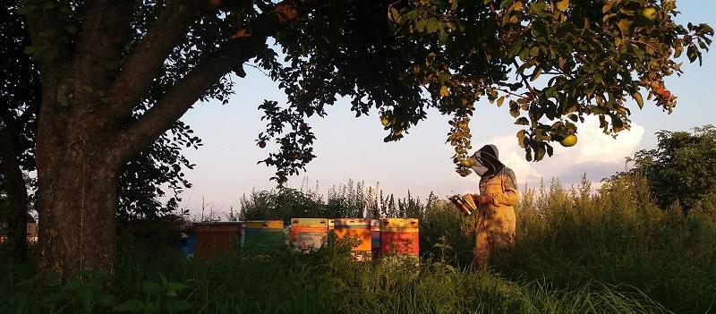 pasieka pszczoły i my miód ule