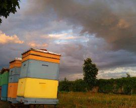 tak wygląda zmierzch w pasiece pszczoły i my w wysychach