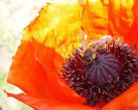 Pasieka pszczoły i my świętuje dzisiaj światowy dzień pszczół