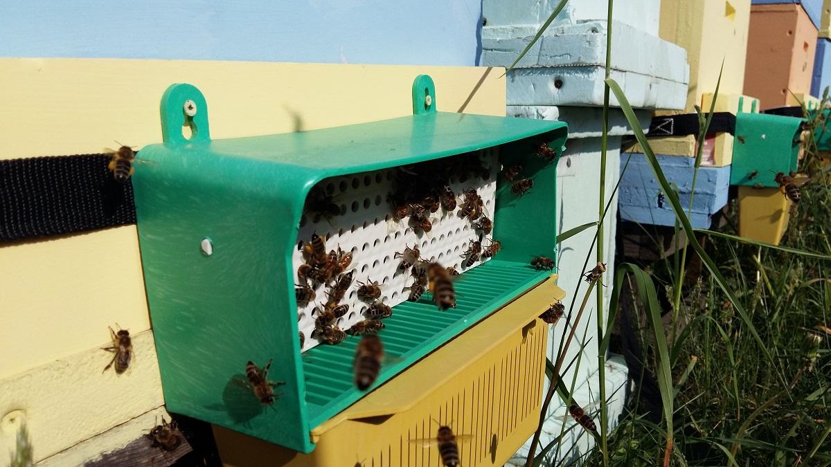 Pyłek pozyskiwany jest za pomocą poławiaczy pyłku