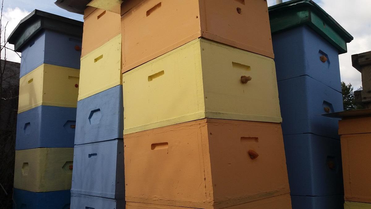 Pszczelarze zimą myją i dezynfekują ule w pasiece