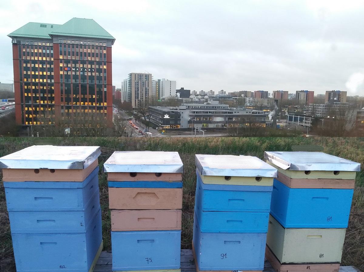 Miasto, psczoły i my. Ule w mieście.