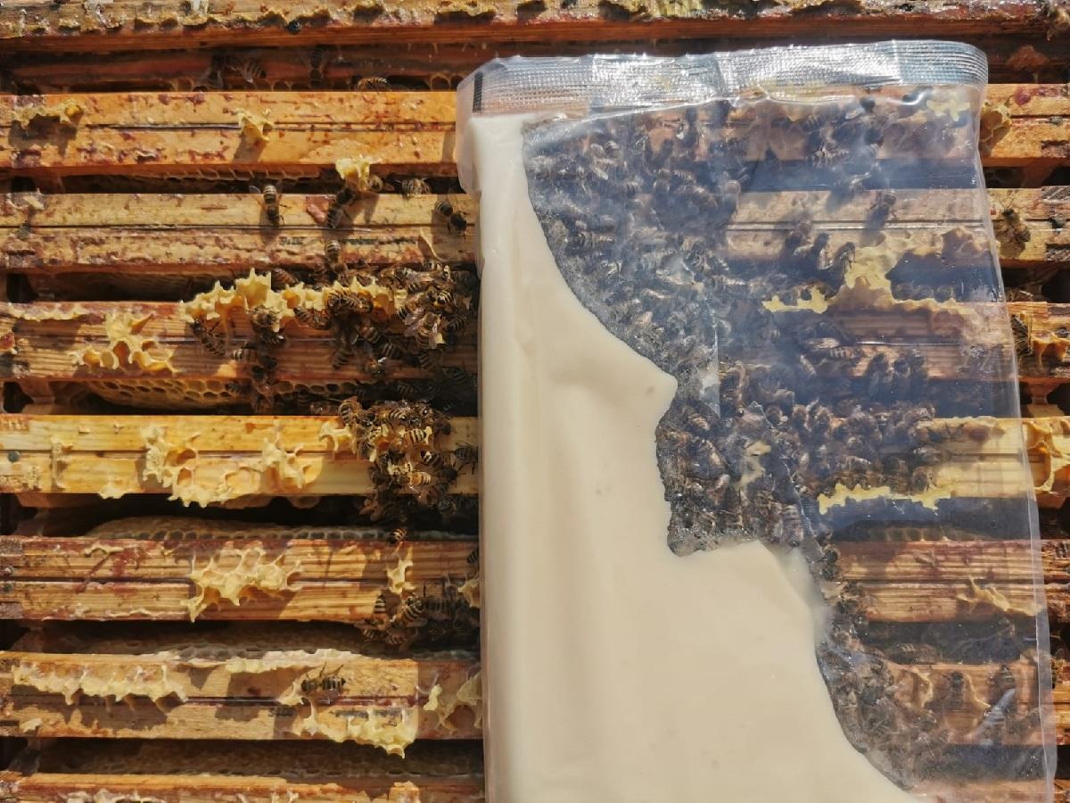 zimowe dokarmianie pszczół w sytuacji, gdy w ulu zabraknie pokarmu