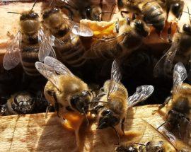 Co robią pszczoły w lutym