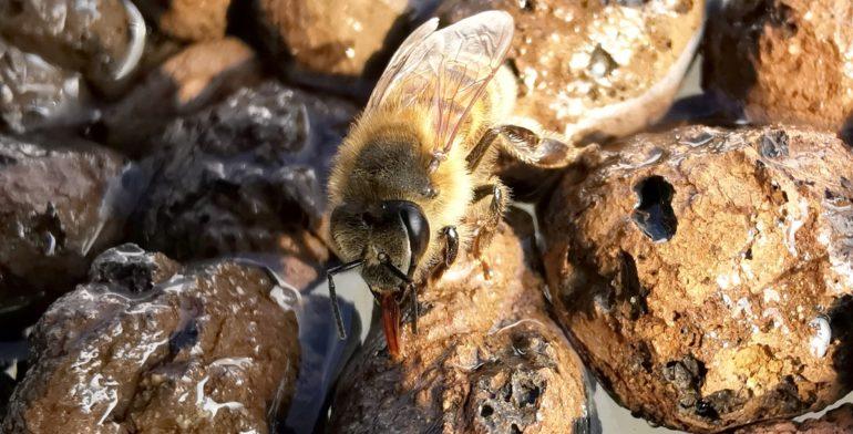 Jak wielką rolę w życiu pszczół odgrywa woda?
